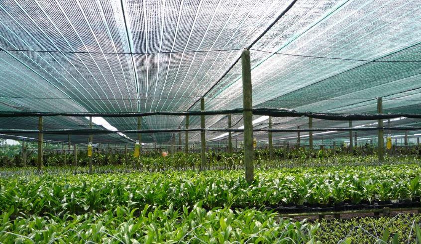 thi công lưới che nắng vườn lan