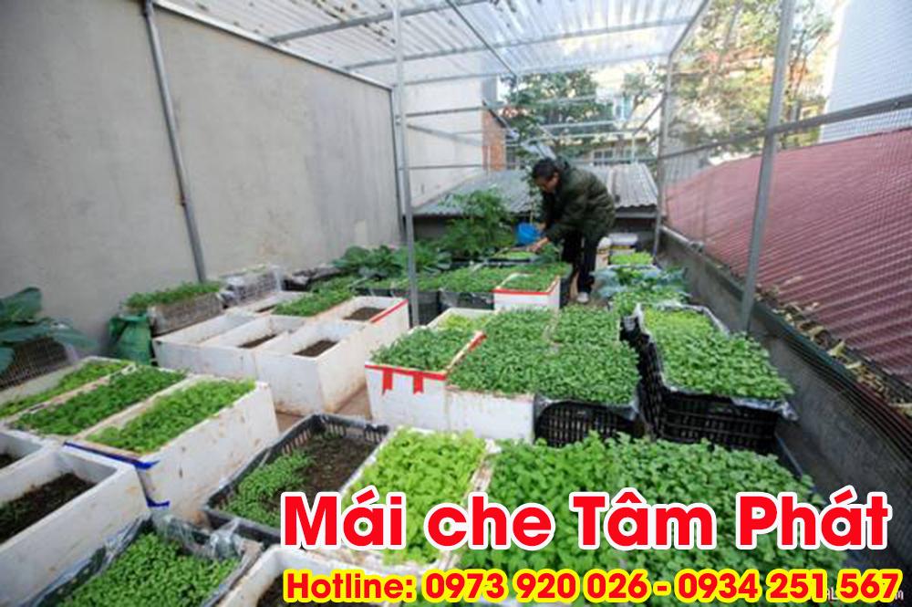 Làm mái che nhựa Poly trồng rau giá rẻ